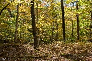 Woods edit3