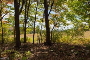 Woods edit4